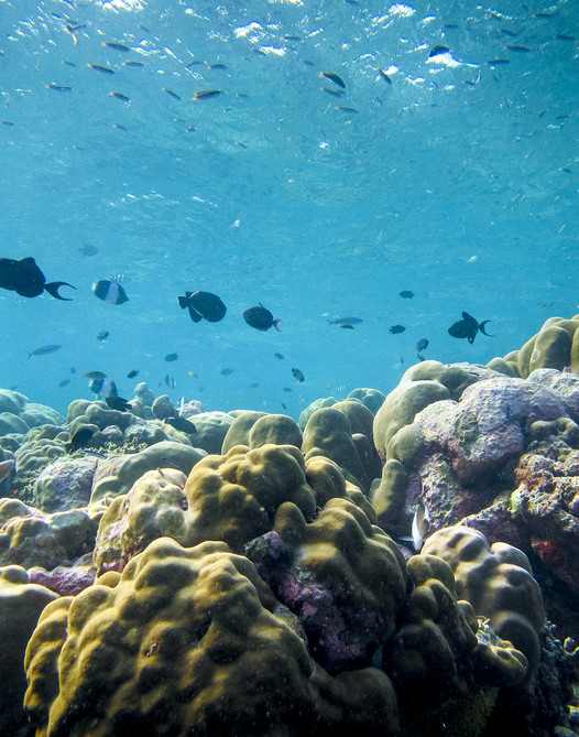 Manta Discovery in Randheli's Lagoon
